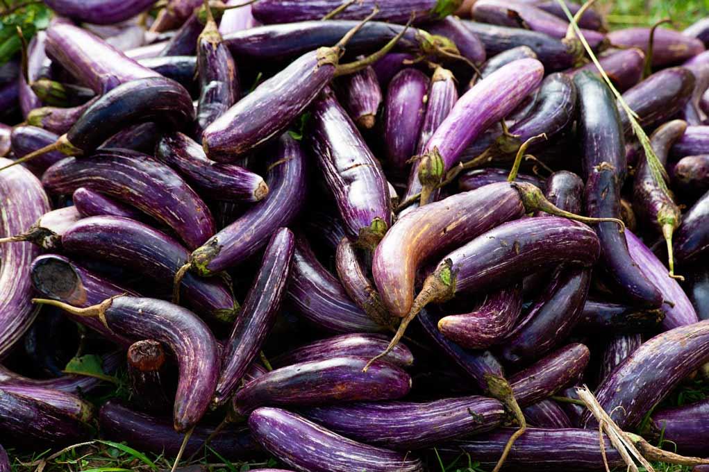 Roasted Japanese Eggplants